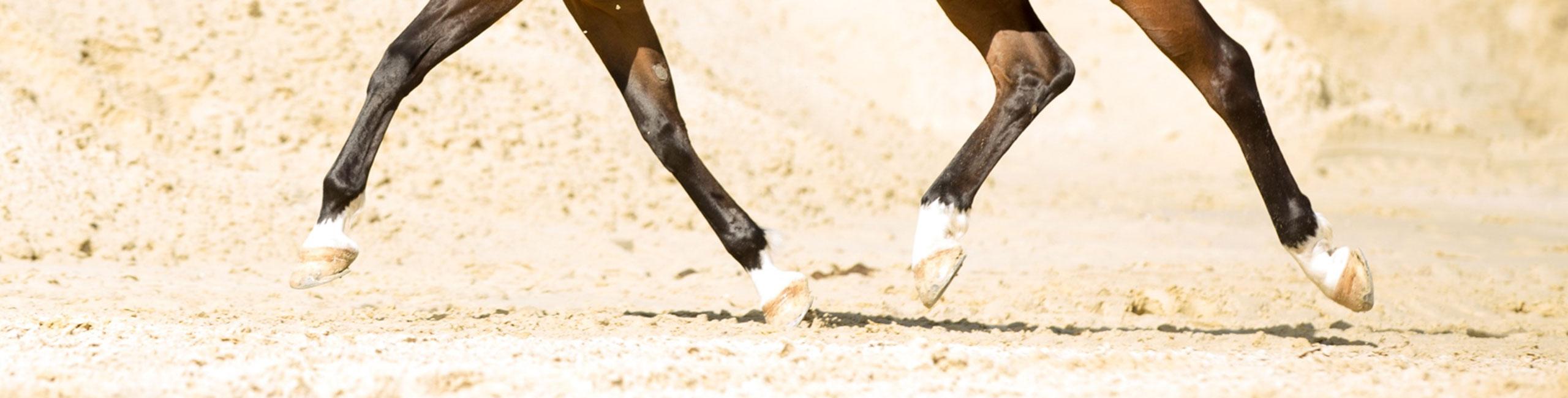 Pferdebeine im Abbau im Trab
