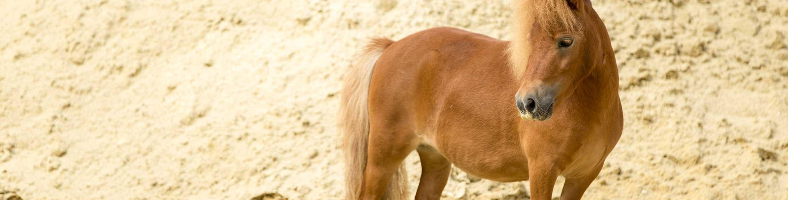 Pony im Abbau an Sandwand
