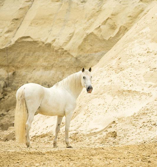 Schimmel im Abbau an Sandwand