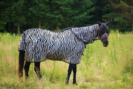 allergien bei pferden
