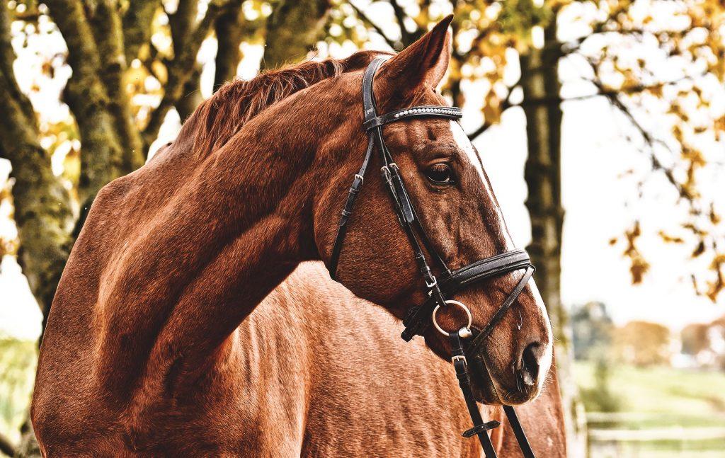 pferd rentner