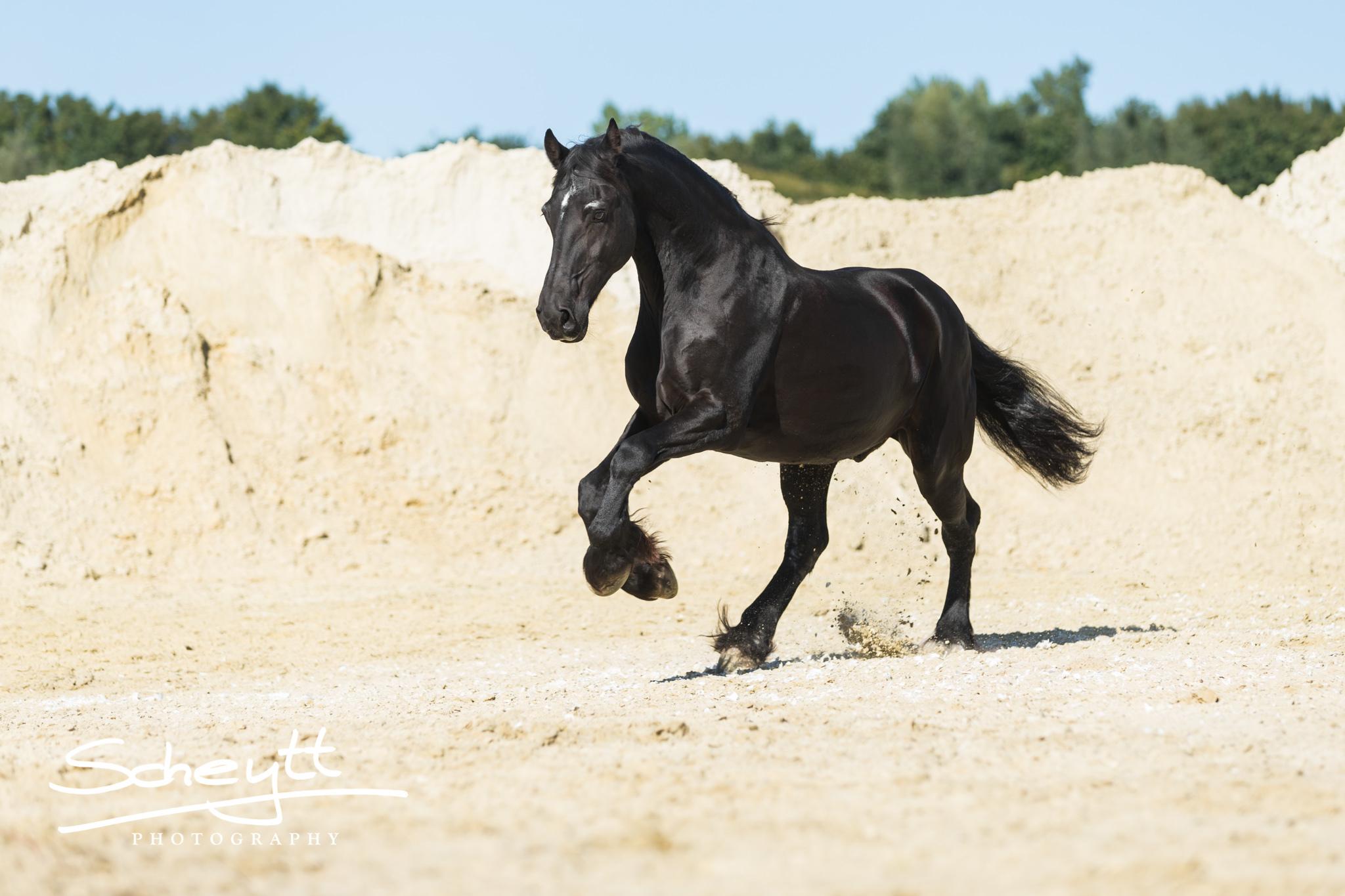 pferde fotoshooting die vorbereitung