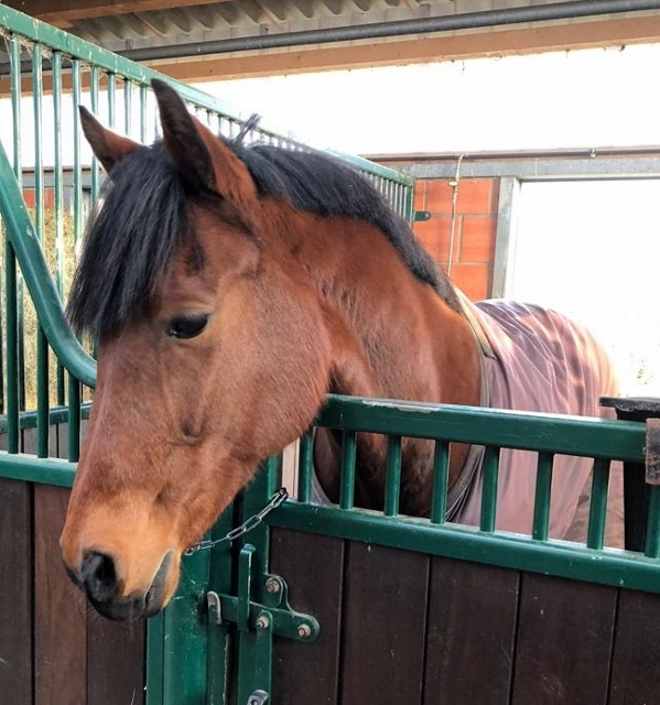 pferde im winter zudecken