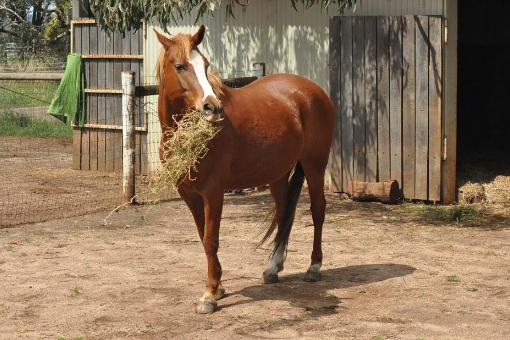 pferde richtig füttern