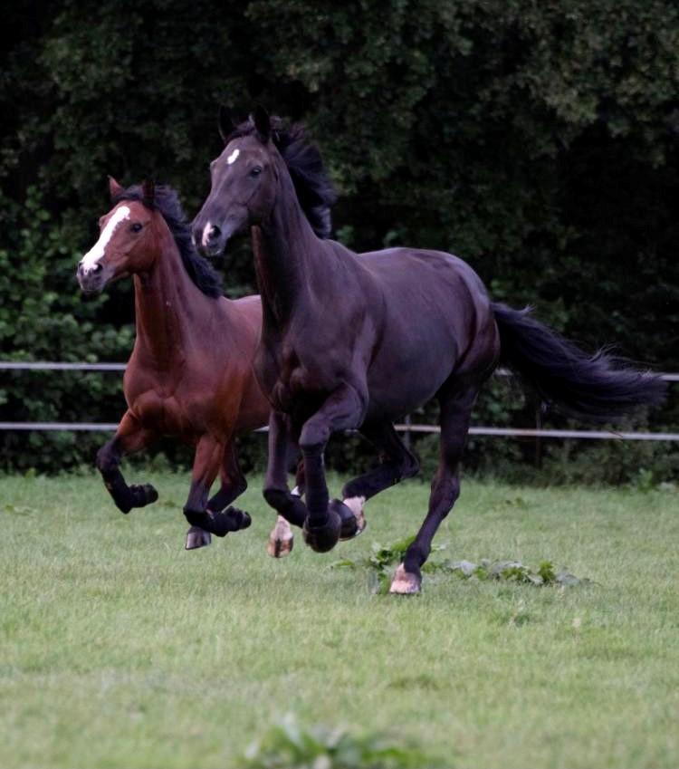 pferde wiese