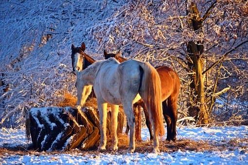 pferdefuetterung winter01