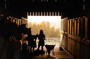 Arbeit im Pferdestall