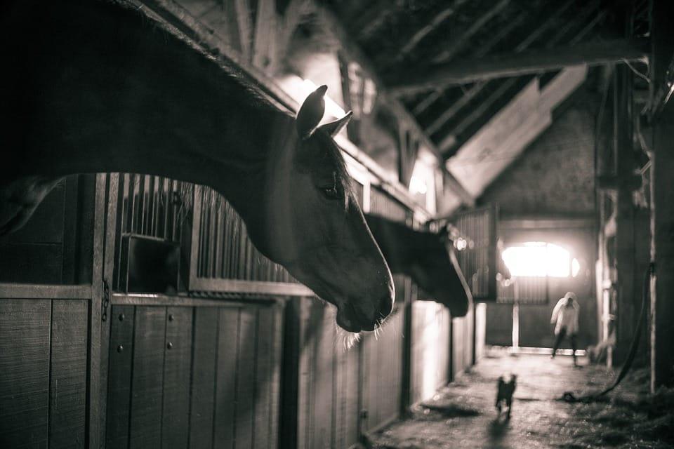 pferedestaelle mit pferden