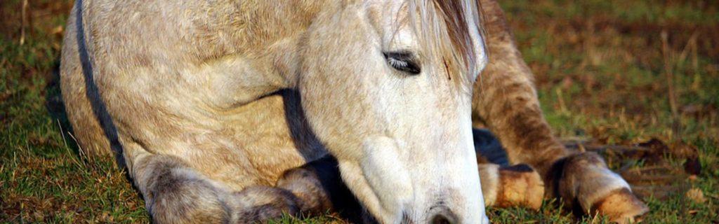 schlafendes pferd im liegen auf der weide