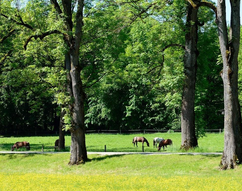 sonnenschutz fuer pferde