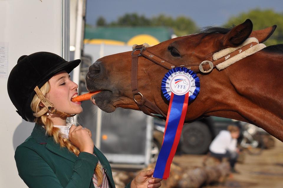 tierschutz im pferdesport