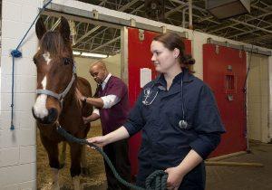 Arbeit als Tierarzt und Tierarzthelfer